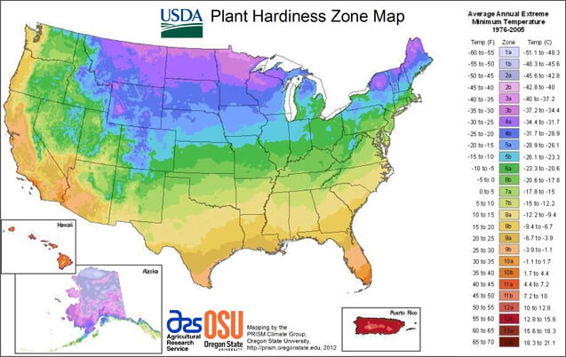 hardiness zone for hummingbird flowers