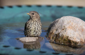 bird bath rocks