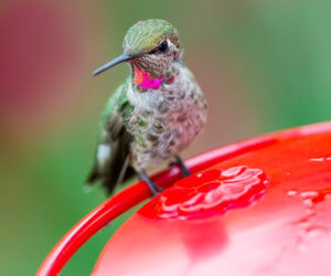 The 8 Best Hummingbird Feeders (That Actually Work in 2019!)